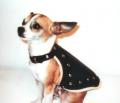 Kutyaruha, kutyakabát, szegecselt bőrből, kutyaruha, kutyakabát, kutyaöltözet